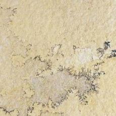 Πέτρα FOSSIL